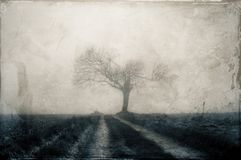 An old mysterious tree on a path in the countryside in winter. With a cold, grunge, vintage edit. An old mysterious dead tree on a path in the countryside in royalty free stock photography