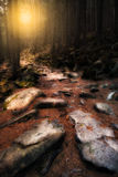 Old mystical forest Stock Image