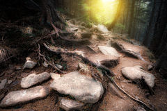 Old mystical forest Royalty Free Stock Photos