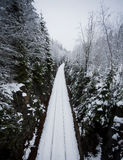 Old Narrow-Gauge Railroad through the Forest Royalty Free Stock Photos