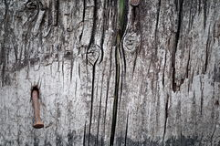 Old natural wood textures Stock Photos