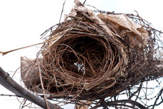 Old nest Stock Photography