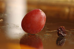 Old and new. Grape raisin comparison Royalty Free Stock Images