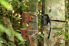 Old and New Camera trap box or case attaches to a tree for capturing wild animals. stock photos