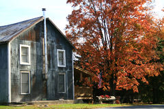Old New England home. An old barn converted into a home in New England on a sunny autumn day with trees in full fall foliage, and Halloween pumpkins on the Stock Photo