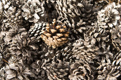 Old and new fir cones Stock Photo