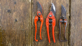 Old and new pruner Royalty Free Stock Photo