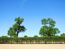 Beautiful trees in Rundale palace park, Latvia Stock Image