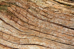 Free Old Oak Stock Photography - 15884172