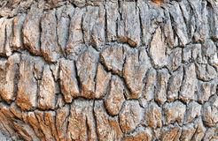 Old oak bark Royalty Free Stock Photos