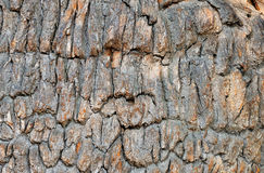 Old oak bark Stock Photography