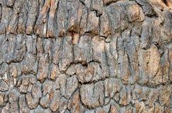 Free Old Oak Bark Stock Photography - 18637902