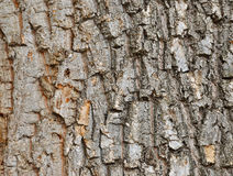Old oak bark Stock Photos