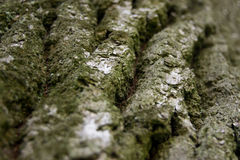 Old oak bark texture. Ideal to use as background Stock Photos