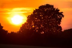 Old oak on sunset Royalty Free Stock Photos