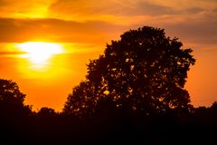 Old oak on sunset Royalty Free Stock Images