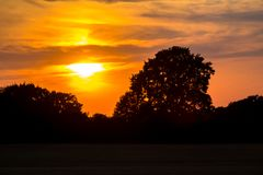 Silhouette of old oak on sunset Royalty Free Stock Photography