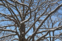 Old oak branches Royalty Free Stock Photos