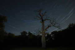 Old oak in front of the stars Royalty Free Stock Photography