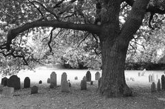 Old oak and headstones Royalty Free Stock Photos