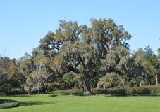 Old oak Stock Photos