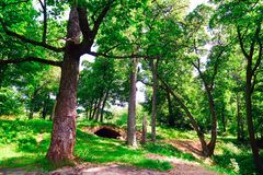 Old oak in the Park on the background of an old bridge. royalty free stock image