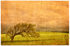 Old Oak Postcard. A California oak on an old vintage postcard Royalty Free Stock Photos