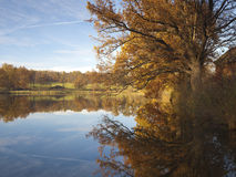 Old oak reflection in water at fall Stock Photo