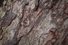 Old oak tree bark closeup texture photo. Rustic tree trunk closeup. Stock Images