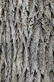 Old oak tree bark structure Royalty Free Stock Photos