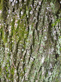 Old oak tree bark texture pattern Royalty Free Stock Photos