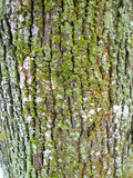 Old oak tree bark texture pattern Stock Photos