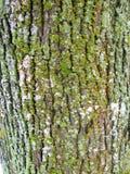 Old oak tree bark texture pattern Stock Photos