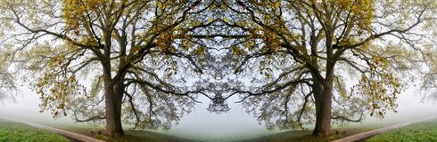 Old Oak Tree Collage Royalty Free Stock Photo