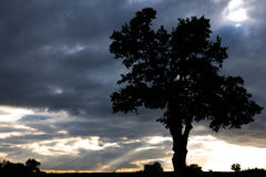 Old oak tree, dark clouds, sunset Royalty Free Stock Photo