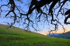 Old oak tree in a grass field with hills Royalty Free Stock Photo