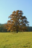 Old oak tree on the horizon royalty free stock image