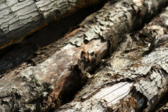Old oak tree lumber detail 1 Stock Image