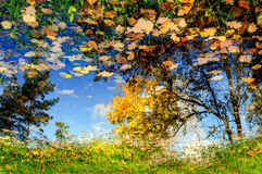 Old oak tree over a pond in cloudy autumn weather Royalty Free Stock Photography