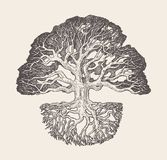 Old oak tree root system drawn vector illustration. High detailed illustration of an old oak tree with a root system, hand drawn, vector stock illustration
