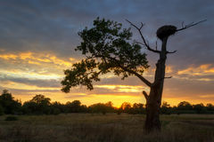 Old oak tree at sunset. Royalty Free Stock Images
