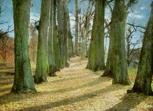 Old oak trees planted in rows. A photograph of an oak tree avenue made to look like an old painting royalty free stock images
