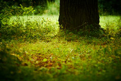 Old oak trunk on a meadow. Stock Images