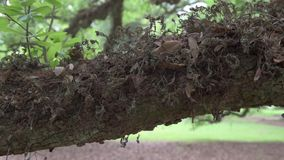 Old Oak Trunk Texture with Moss stock video footage