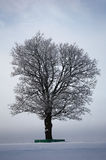 Old oak in a winter field. Royalty Free Stock Photography