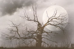 Old oak on winter night Stock Image