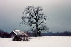 Old oak wooden house in winter Stock Images