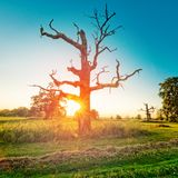 The Old Oaks Stock Photography