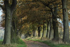 Free Old Oaks Of The Reinhard Forest Royalty Free Stock Photos - 46561578