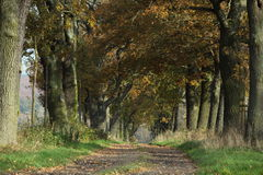 Free Old Oaks Of The Reinhard Forest Stock Photos - 46561593